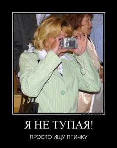 демотиватор Я НЕ ТУПАЯ! ПРОСТО ИЩУ ПТИЧКУ - 2011-10-31