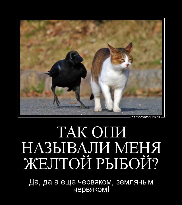 Анекдот про ворону кыш не мог сказать