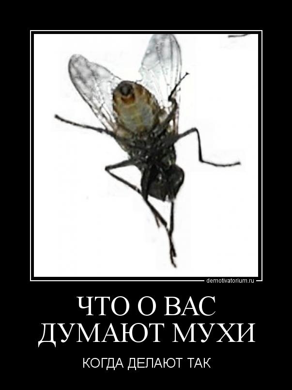 картинки прикольные про мух