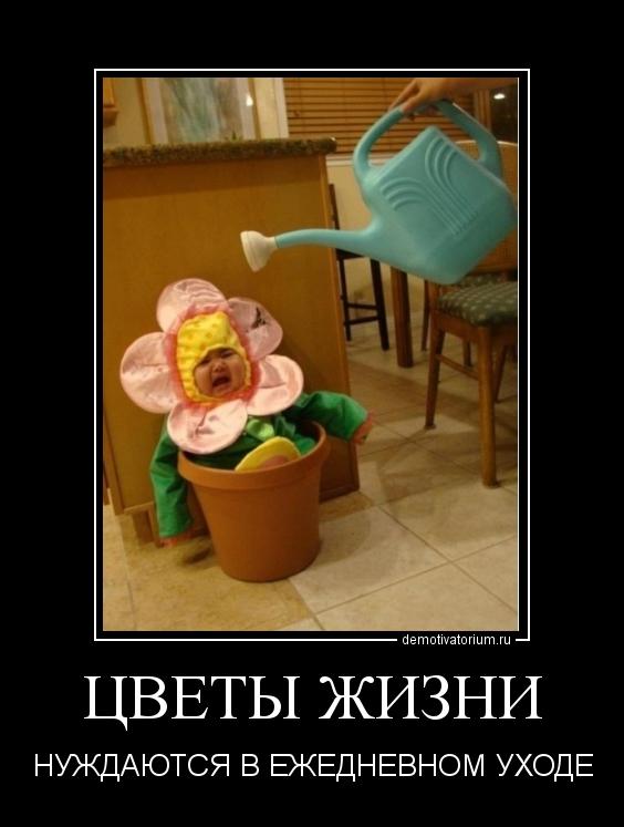 Демотиватор цветы жизни нуждаются в