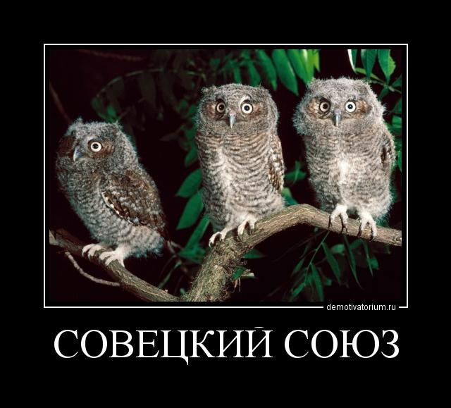 демотиватор совы