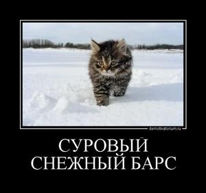 Демотиватор СУРОВЫЙ СНЕЖНЫЙ БАРС