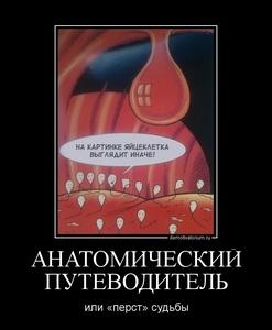 демотиватор АНАТОМИЧЕСКИЙ ПУТЕВОДИТЕЛЬ или «перст» судьбы - 2011-11-28