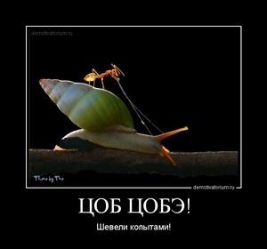 демотиватор ЦОБ ЦОБЭ! Шевели копытами! - 2011-12-14
