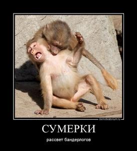 демотиватор СУМЕРКИ рассвет бандерлогов