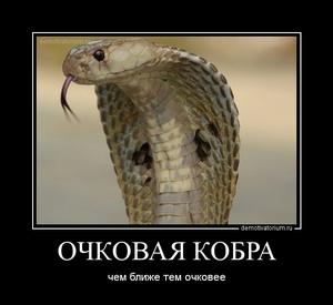 демотиватор ОЧКОВАЯ КОБРА чем ближе тем очковее - 2011-12-28