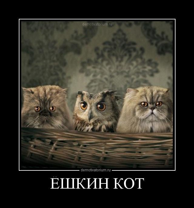 Юмористическая картинка ешкин кот