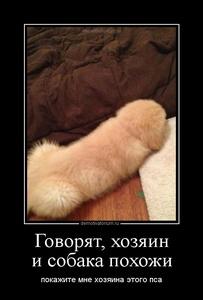 Демотиватор Говорят, хозяин и собака похожи покажите мне хозяина этого пса