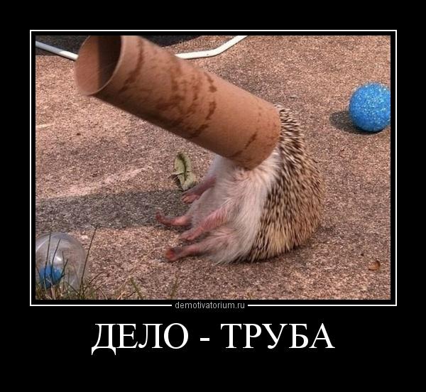http://demotivatorium.ru/sstorage/3/2012/03/0503121502073740.jpg