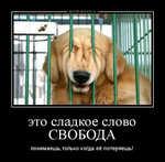 Демотиватор «это сладкое слово СВОБОДА понимаешь,только когда её потеряешь!»