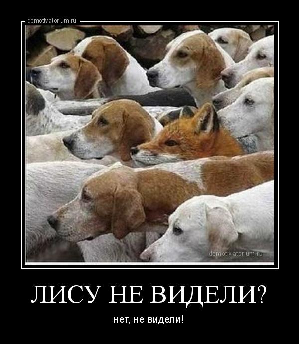 демотиватор ЛИСУ НЕ ВИДЕЛИ? нет, не видели! - 2012-3-02