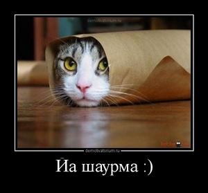Демотиватор Йа шаурма :)