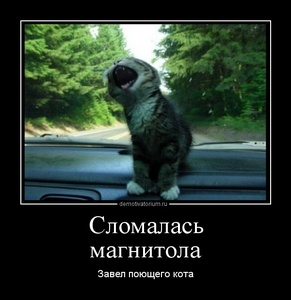Демотиватор Сломалась магнитола Завел поющего кота