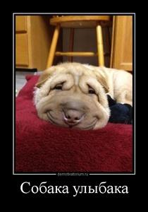 Демотиватор Собака улыбака