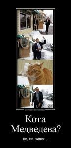 Демотиватор «Кота Медведева? не, не видел...»