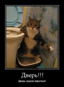 Демотиватор Дверь!!! Дверь закрой животное!