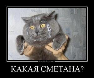 демотиватор КАКАЯ СМЕТАНА?  - 2012-5-29