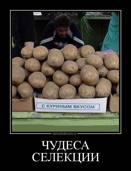 демотиватор ЧУДЕСА СЕЛЕКЦИИ  - 2012-7-27