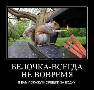 демотиватор БЕЛОЧКА-ВСЕГДА НЕ ВОВРЕМЯ Я ВАМ ПОКАЖУ!!! ОРЕШКИ ЗА ВОДКУ! - 2012-7-14