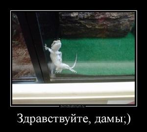демотиватор Здравствуйте, дамы! ;)  - 2012-7-26