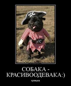 демотиватор СОБАКА - КРАСИВООДЕВАКА  - 2012-7-27