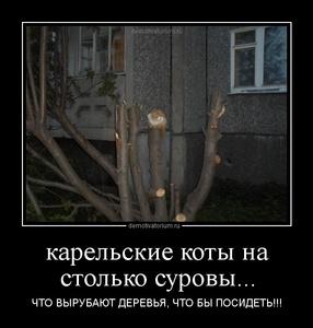 демотиватор карельские коты на столько суровы... ЧТО ВЫРУБАЮТ ДЕРЕВЬЯ, ЧТО БЫ ПОСИДЕТЬ!!! - 2012-7-28