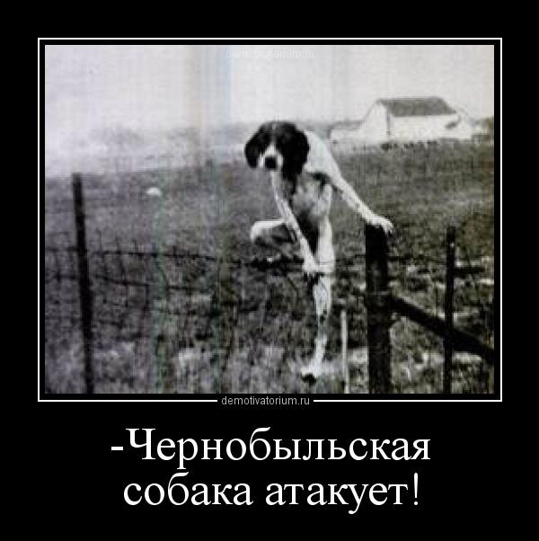 Радиоактивный фон в Чернобыле оказался ниже, чем в центре Киева, - Семерак - Цензор.НЕТ 2974