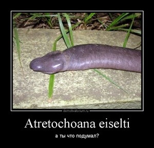 Демотиватор Atretochoana eiselti а ты что подумал?