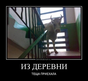 Демотиватор ИЗ ДЕРЕВНИ ТЁЩА ПРИЕХАЛА
