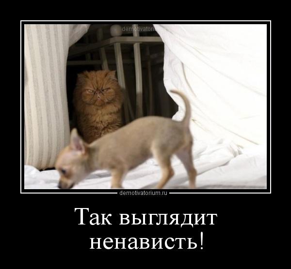 http://demotivatorium.ru/sstorage/3/2012/09/1809122229481461.jpg