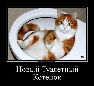 демотиватор Новый Туалетный Котёнок  - 2012-9-23