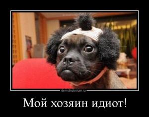 демотиватор Мой хозяин идиот!  - 2012-9-23