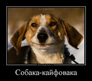 Демотиватор Собака-кайфовака