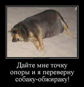 демотиватор Дайте мне точку опоры и я переверну собаку-обжираку!  - 2012-9-24