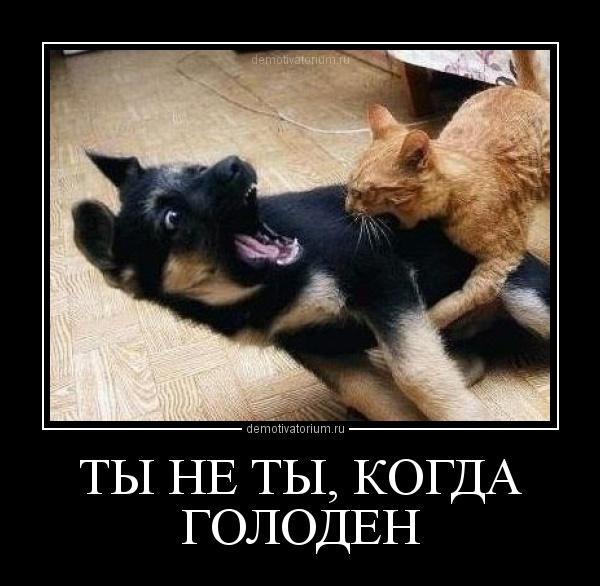 демотиватор ТЫ НЕ ТЫ, КОГДА ГОЛОДЕН  - 2012-10-29