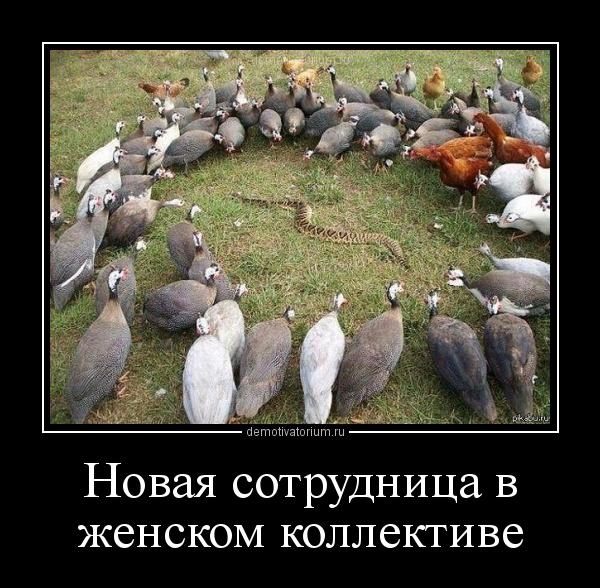 картинка со змеями дружный женский коллектив