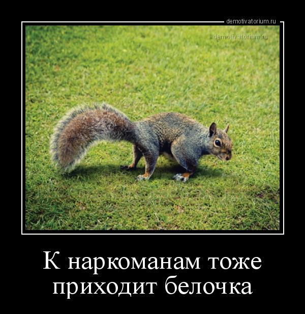demotivatorium_ru_k_narkomanam_toje_prih