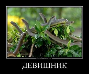 Демотиватор ДЕВИШНИК