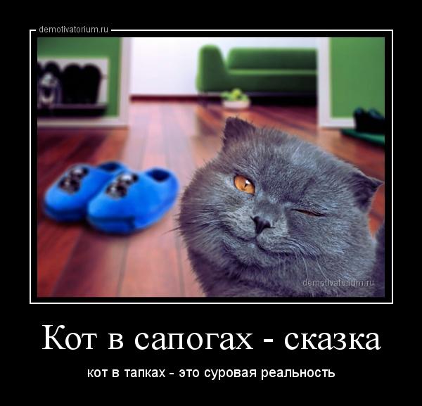 Сек рассказы с котом 4 фотография