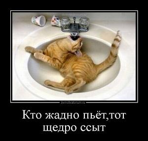 Фото ссыт и пьет фото 95-977