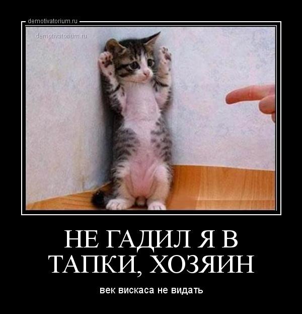 http://demotivatorium.ru/sstorage/3/2013/02/1702131241447448.jpg