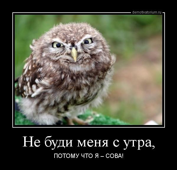Фотошоп сова