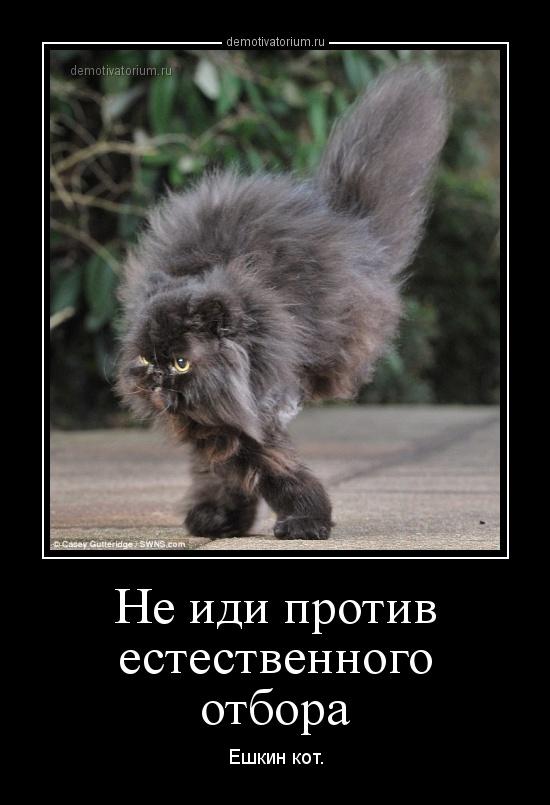 ешкин кот прикольные картинки статья рассказывающая