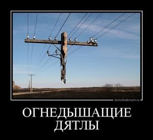 демотиватор ОГНЕДЫШАЩИЕ ДЯТЛЫ  - 2013-2-16