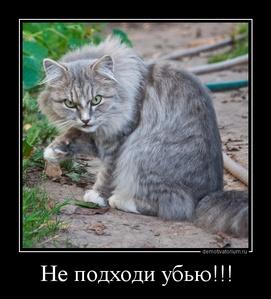 демотиватор Не подходи убью!!!