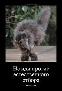 демотиватор Не иди против естественного отбора Ёшкин кот.