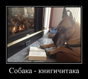 демотиватор Собака - книгичитака  - 2013-3-28