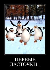 демотиватор ПЕРВЫЕ ЛАСТОЧКИ...  - 2013-3-30