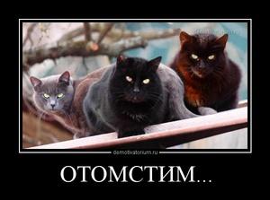 демотиватор ОТОМСТИМ...