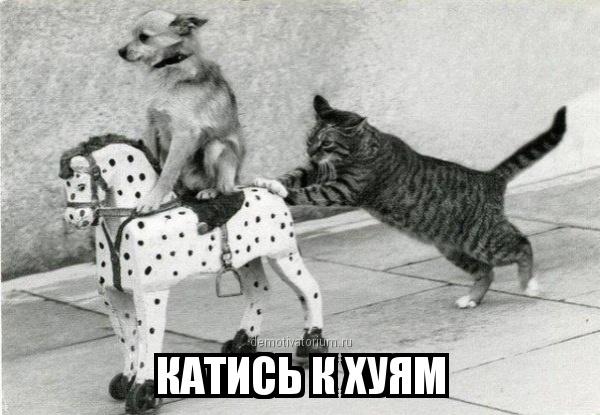 http://demotivatorium.ru/sstorage/3/2013/06/03033607989009/0306130336074186.jpg